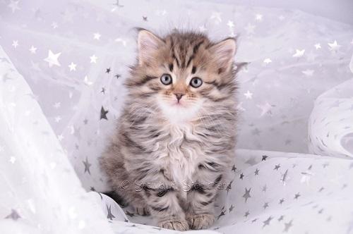 Photo chaton trop mignon tigr photo de chat - Chat tout mignon ...