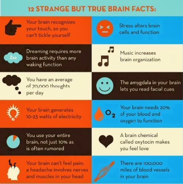 12 True BRAIN Facts You Definitely Don't Know