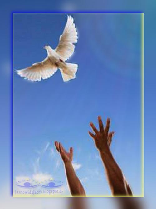 DuchowyUzdrowiciel pl - Gołąbek Symbolizujący Wolność Czystość Serca