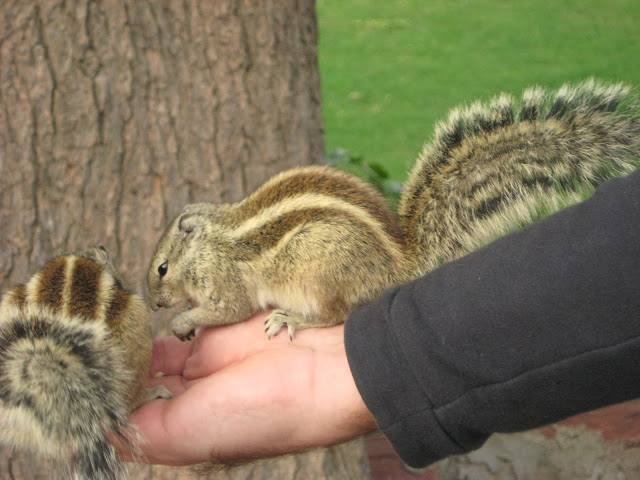 scoiattoli Agra