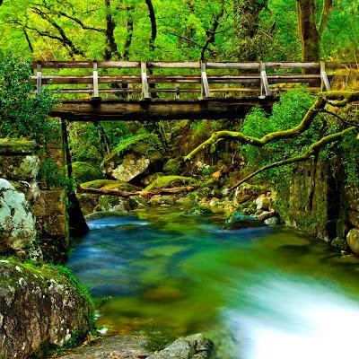 Hermoso paisaje con un río y puente de madera