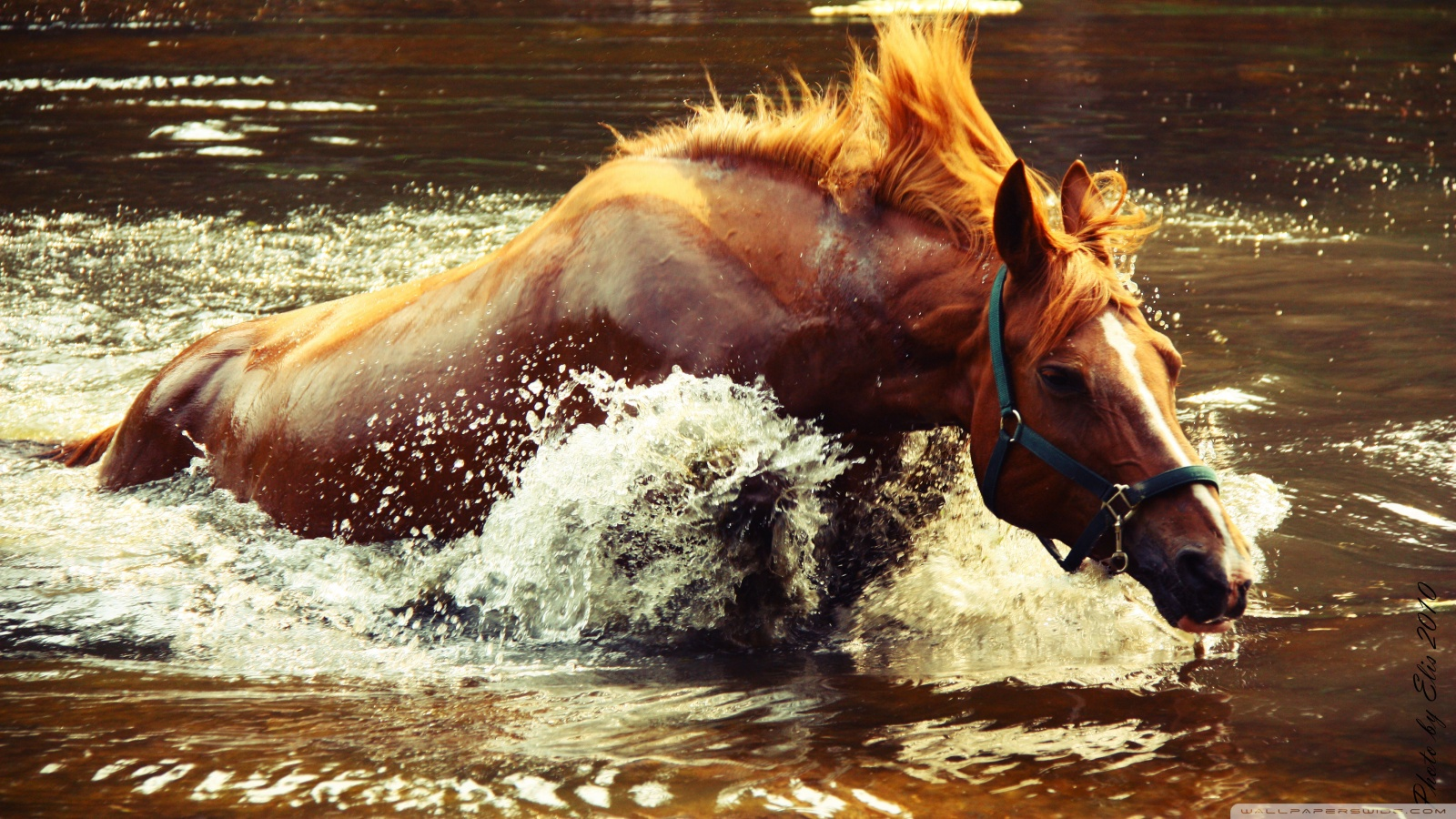 Horses HD Wallpapers Great Horses | Animal Photo