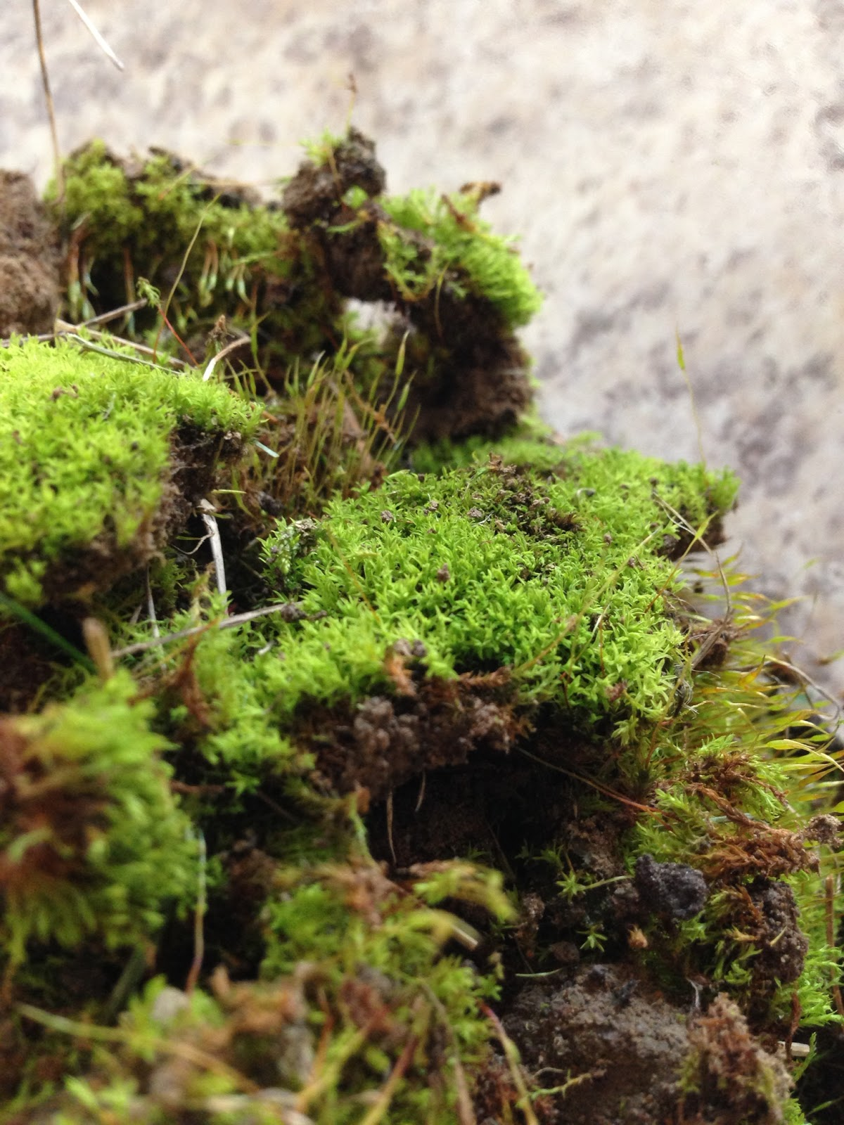 close up of moss