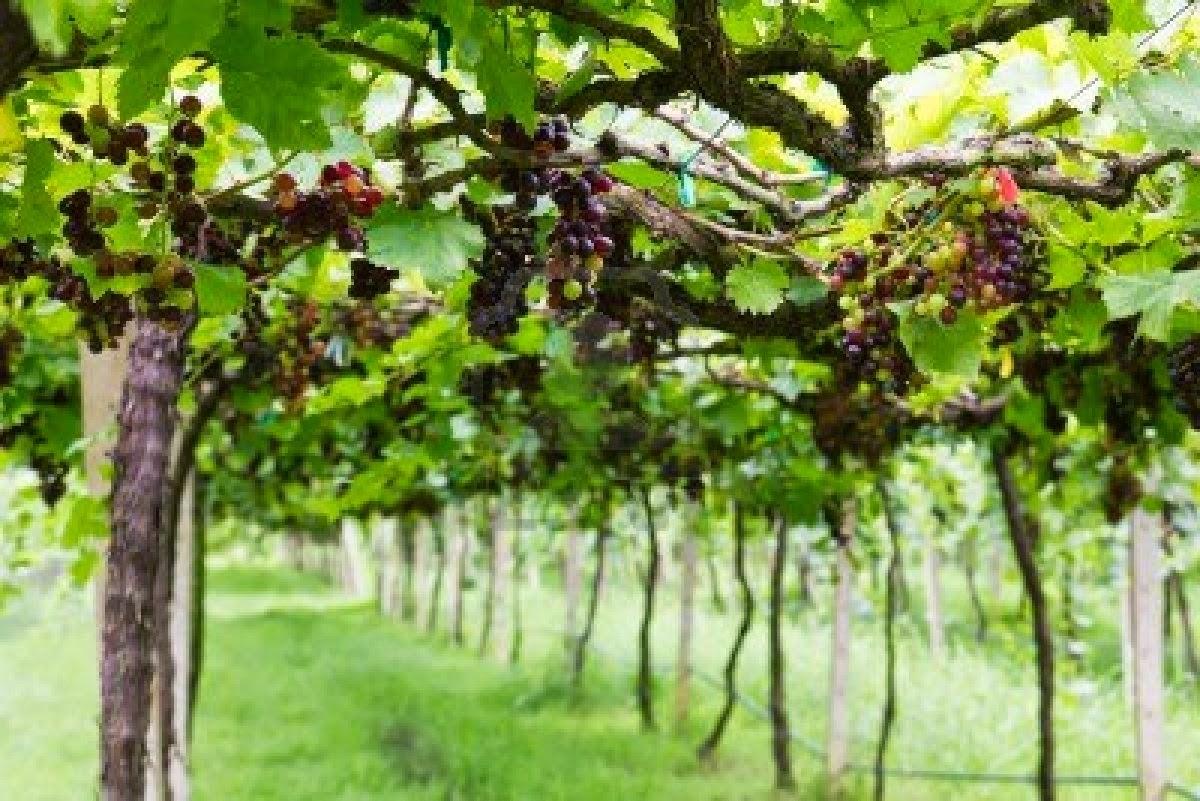 Epitome John 15 Branches Abide In The Vine
