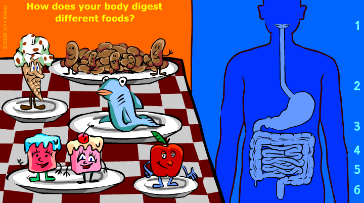 http://interactivehuman.blogspot.com.es/2008/05/digestion-interactive-game-for-kids.html