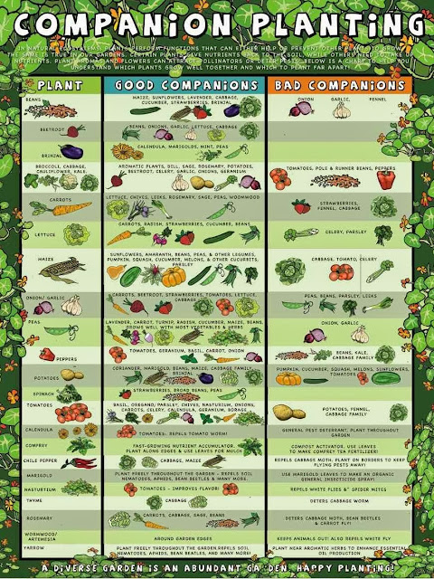 Genial Easy Companion Planting. Vegetable And Flower Garden
