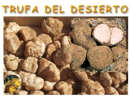 Curiosidades de cocina la trufa del desierto terfezias for La cocina del desierto madrid