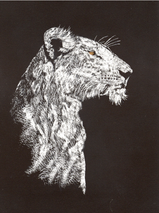 Scratchboard art for kids - photo#17