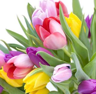 ramos de tulipanes de colores
