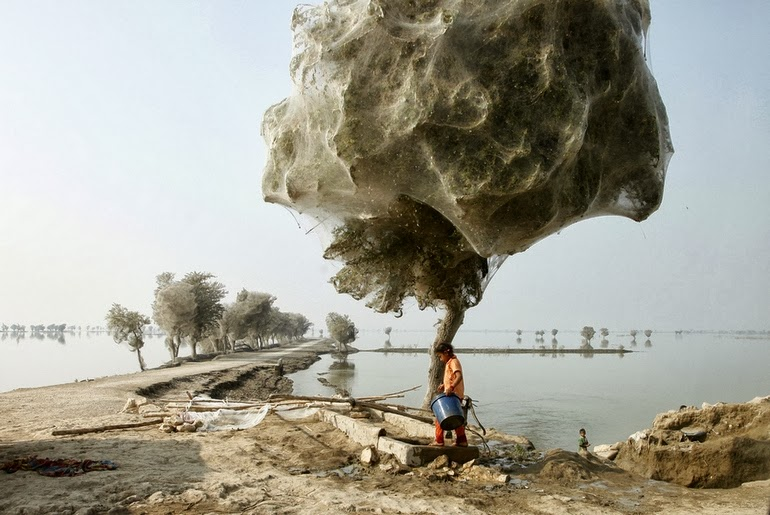 Spiderweb cocooned trees in Pakistan - 15 Things You Won't Believe Actually Exist In Nature