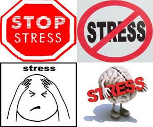 Makanan Penghilang Stress Terbaik