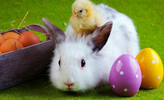 Huevos con conejo de pascua