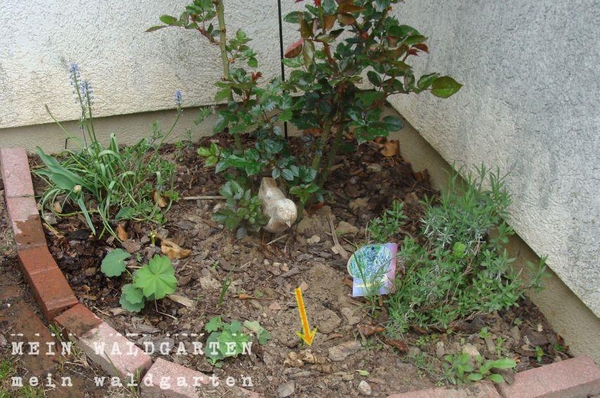 Mein waldgarten auch wenn es bescheiden aussieht - Katzenklo im garten was tun ...