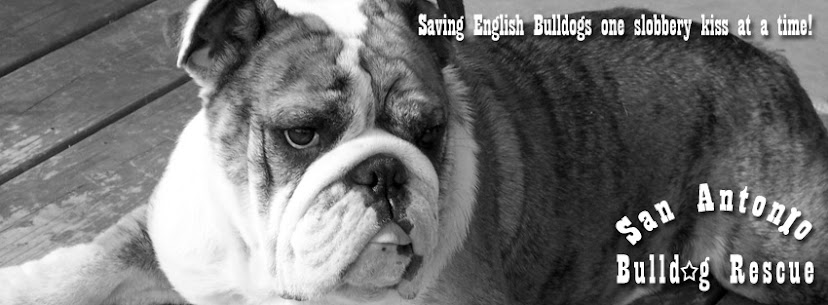 San Antonio Bulldog Rescue, Inc.