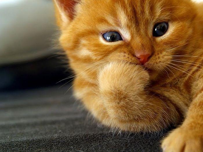 gambar kucing menangis gambar kucing