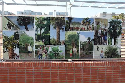 exposition de palmiers square Line Porcher