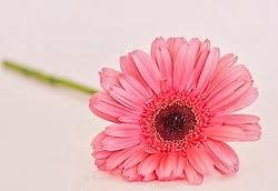 Flor, simplesmente flor