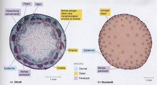 Struktur dan Fungsi Jaringan Batang