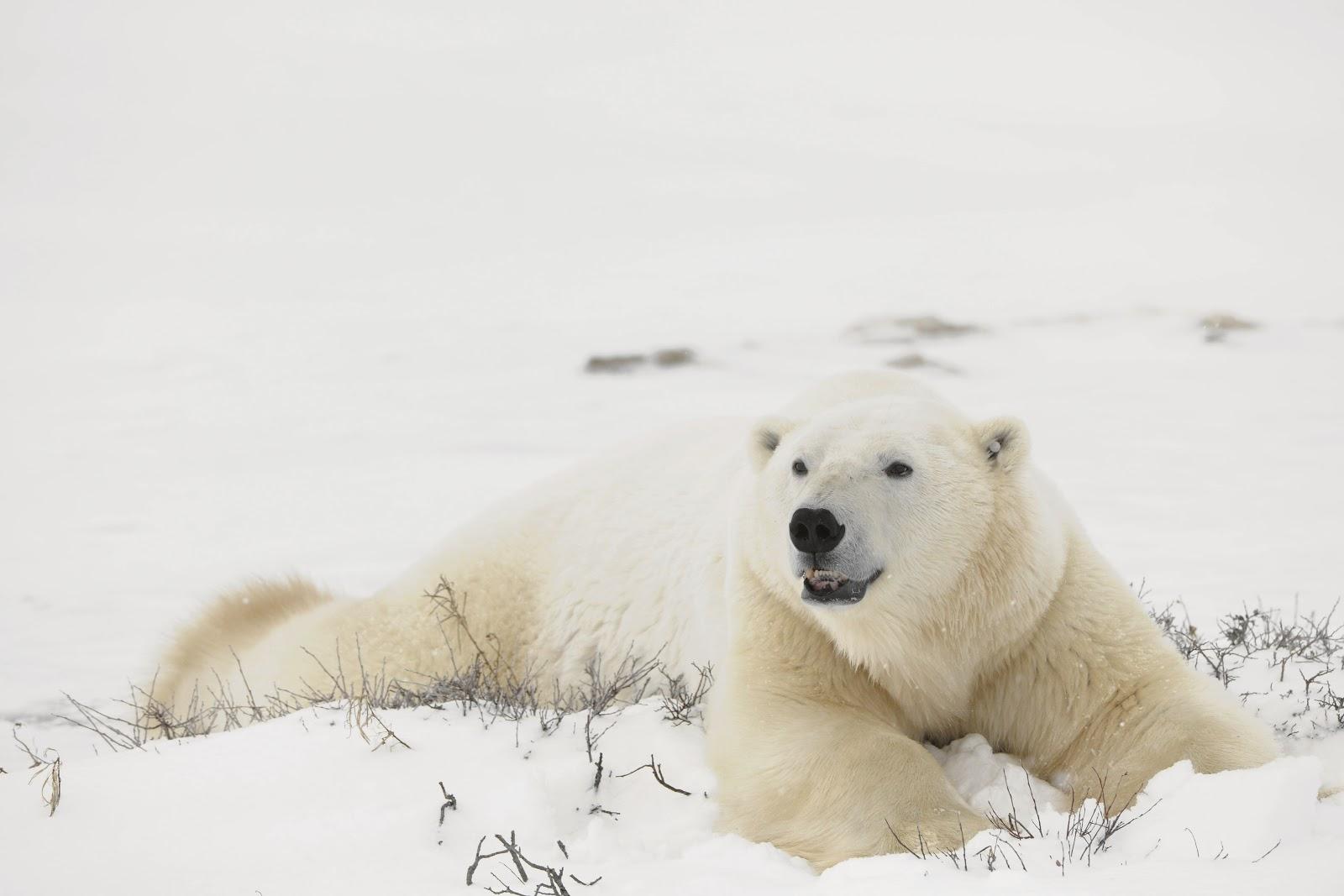 Amazing Polar Regions