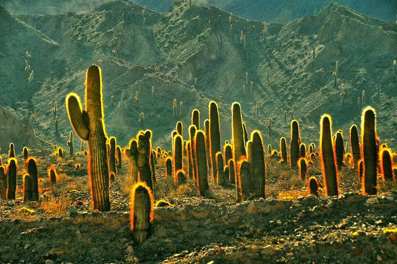 cactos - plantas xerófilas