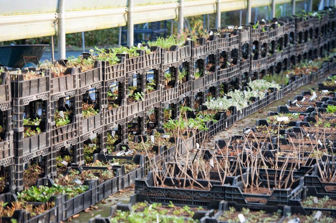 Kwekerij De Kleine Plantage: november 2014