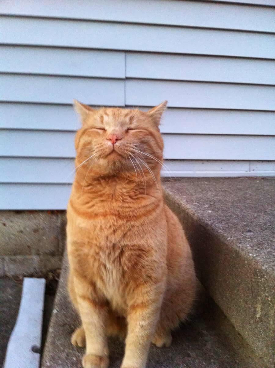 Funny cats - part 83 (40 pics + 10 gifs), cat pics, funny cat