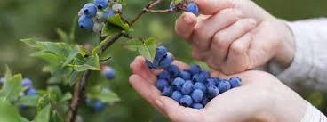 blåbärssoppa mot lös mage