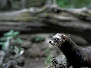 ملف كامل عن اجمل واروع الصور للحيوانات  المفترسة   حيوانات الغابة  1366666899_ccc3d89369