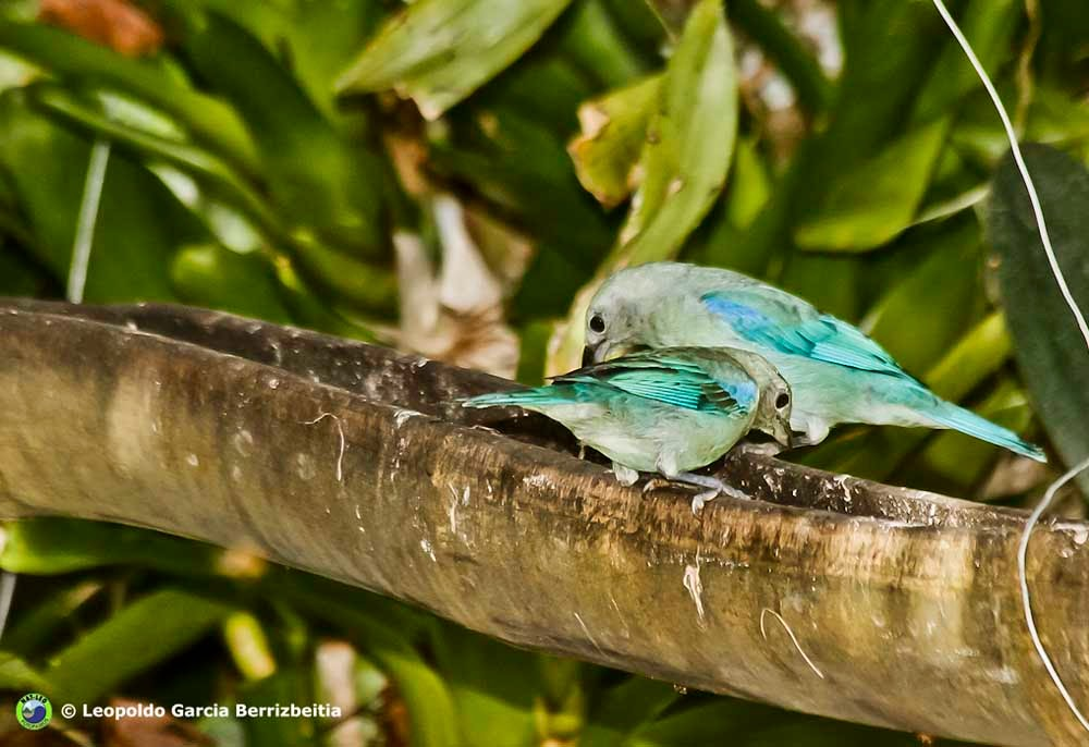 Digital camera adventures la importancia de los comederos for Bebederos para aves jardin