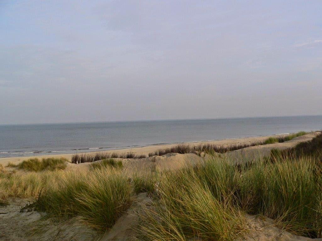 Wochenende Winter Urlaub Insel Meer Strand Düne Gras Wasser Aussicht Sand