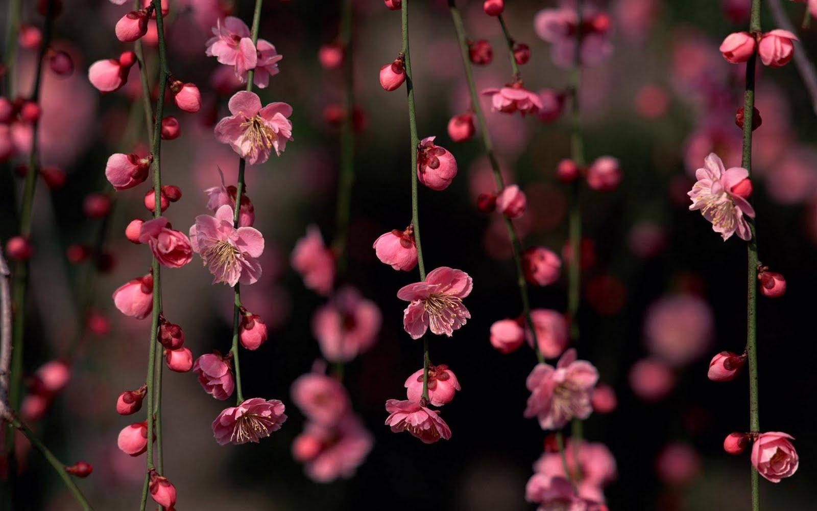 http://2.bp.blogspot.com/-iDL5eGiMlRk/TgY3QVupYeI/AAAAAAAAA4k/scfuCBcJtfE/s1600/Trees_Spring_flowers_hd_wallpaper.jpg