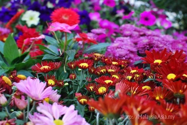 Floria Putrajaya Flower and Garden Festival