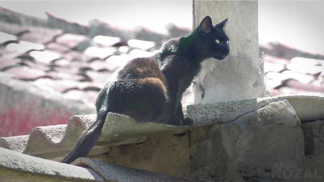 El gato negro, 2013  Abbé Nozal