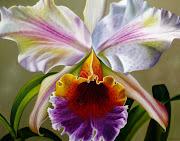 Cuadros de flores al óleo. Naturaleza muerta flores pintura al óleo sobre . cuadro de flor ã³leo