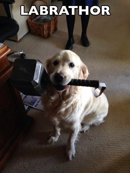 Thor's pet dog