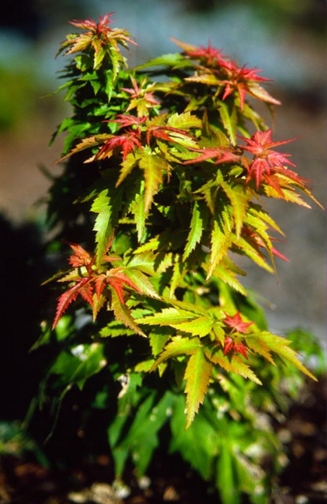 Flora Wonder Blog Mincher Plants
