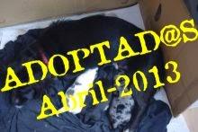 Poncha y sus tres cachorr@s adoptad@s