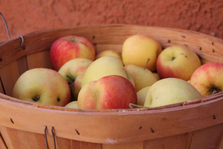 bushel of Honey Crisp Fall Apples | Bandy Canyon