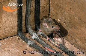 rodenticides in new zealand