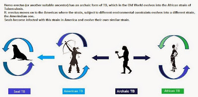 Origin of TB in America
