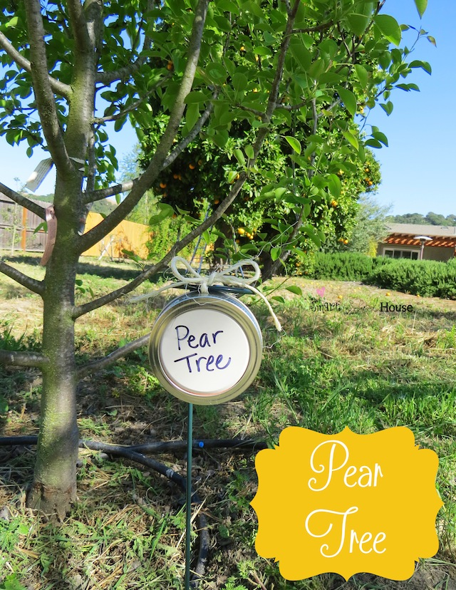 DIY Mason Jar Lid Tree Markers Project - Pear Tree