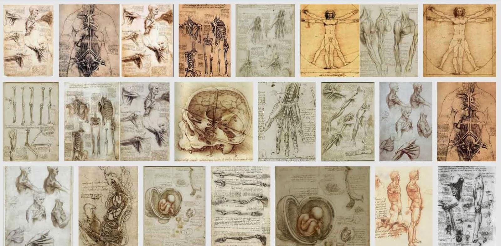 Leonardo da vinci anatomy drawings 9363897 - follow4more.info