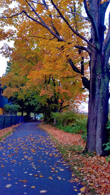 The-River-Walk-Trail-Charles-River-Waltham