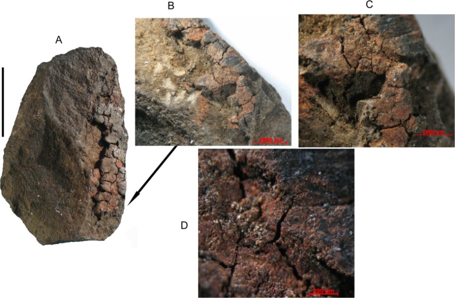 South Africans used milk-based paint 49,000 years ago