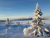 Winter at  Nordseter