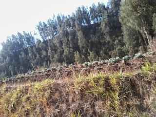 hutan-kebun-bromo