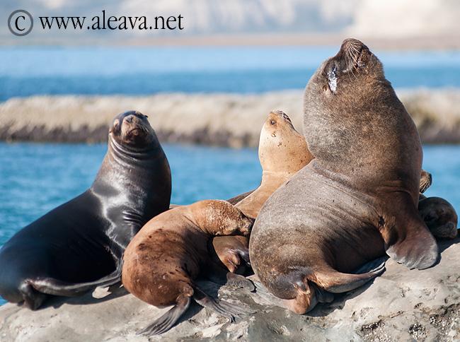 Punta Alt - Buceo con lobos marinos en Puerto Pirámides   Península ...