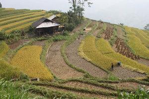 Sán Sả Hồ commune, Hoàng Su Phì district