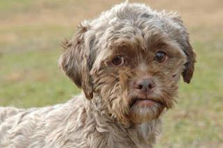 Dog with human face named Tonik up for adoption