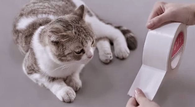 "WTF Ad of the day: Kotex, ""Cats"""